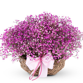 핑크 안개꽃바구니