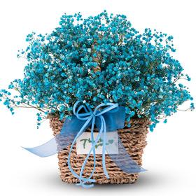 블루 안개꽃바구니